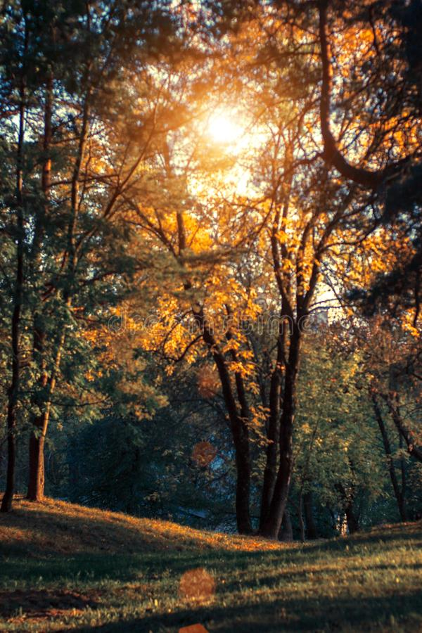 Jesień zmierzchu krajobraz z koloru żółtego i zieleni drzewami Spadku wirh zieleni parkowe sosny i żółci popióły w Minsk fotografia royalty free