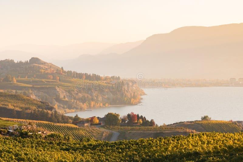Jesień zmierzchu widok Okanagan jezioro, winnicy i Munson góra blisko Penticton, obrazy royalty free