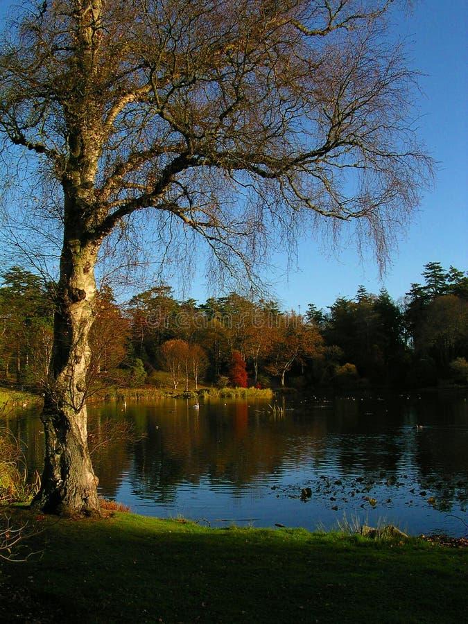 Download Jesień obraz stock. Obraz złożonej z jezioro, błękitny, spadek - 28245