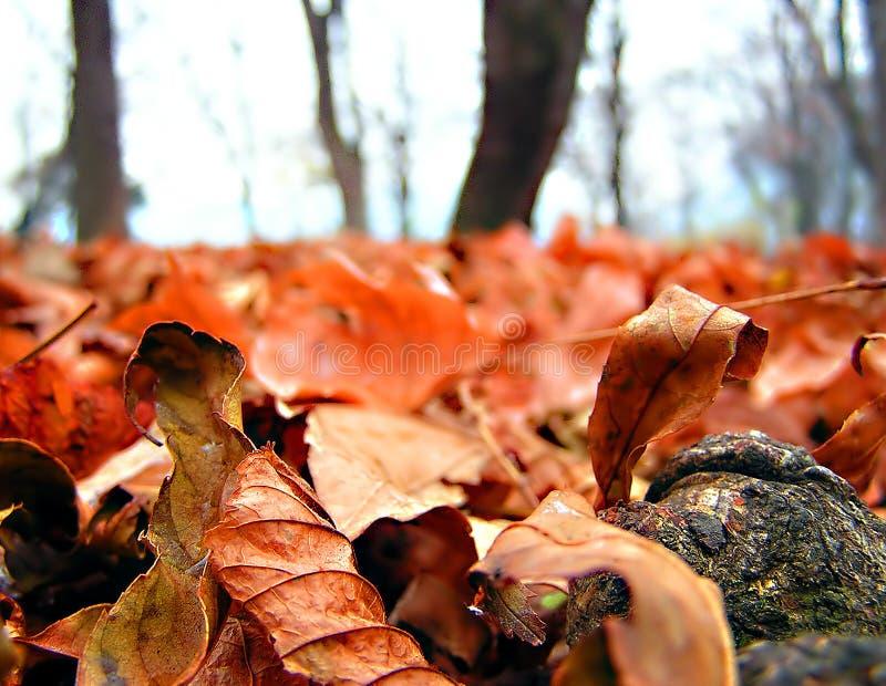 Download Jesień zdjęcie stock. Obraz złożonej z ostrość, drzewa, plama - 44560
