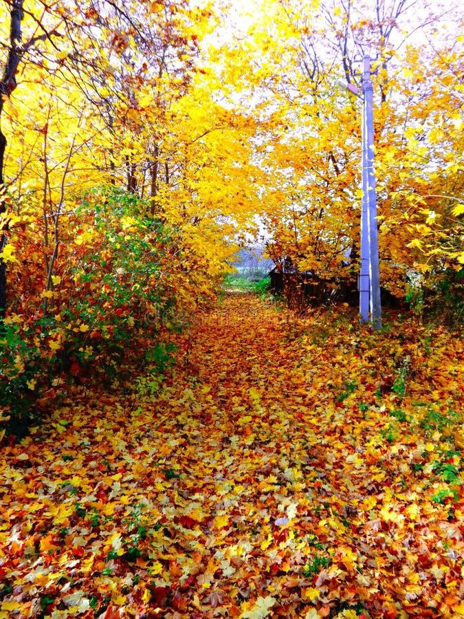 Download Jesień zdjęcie stock. Obraz złożonej z natura, kamień - 53783006