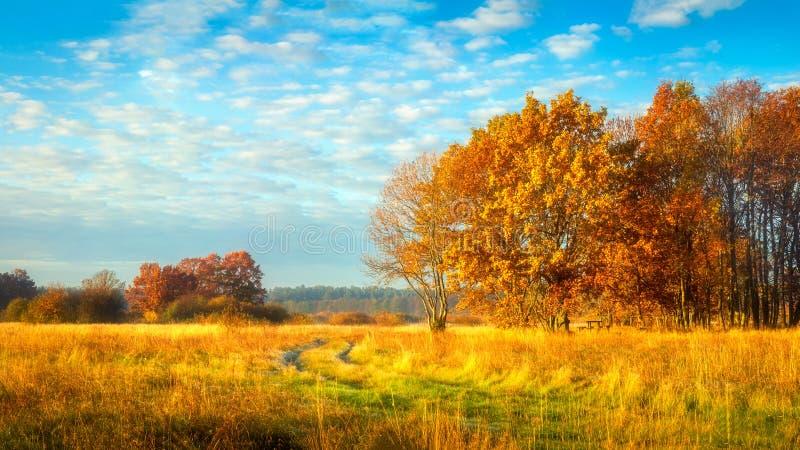jesie? b??kit d?uga natura ocienia niebo Października krajobraz na pogodnym jaskrawym dniu Kolorowi drzewa na pięknej łące w rank obrazy stock