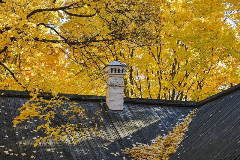 Jesie? Czarny dach budynek z spadać żółtymi liśćmi klonowymi i białym kominem obraz royalty free