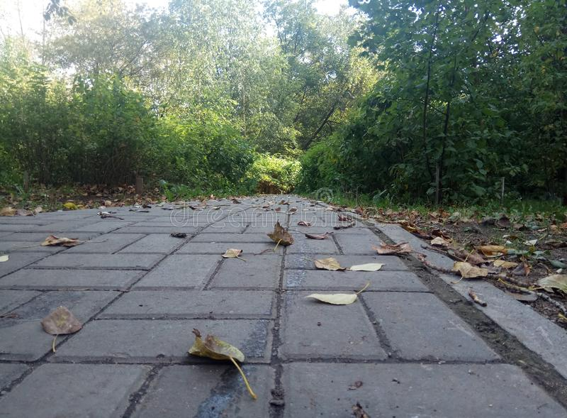 Jesie? dzie? lasu krajobraz pogodny popielaty niebo i drzewa z żółtymi liśćmi i żadny liśćmi horyzont naturalny tło Rosja fotografia royalty free