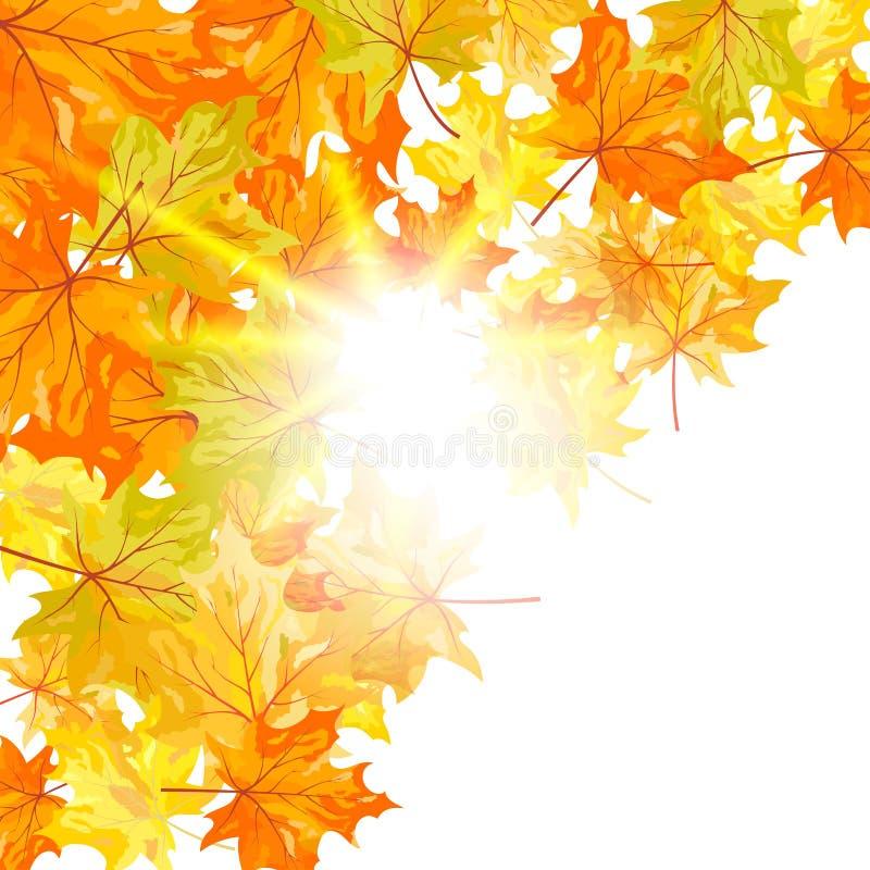 Download Jesień klon ilustracja wektor. Obraz złożonej z greenbacks - 26486064