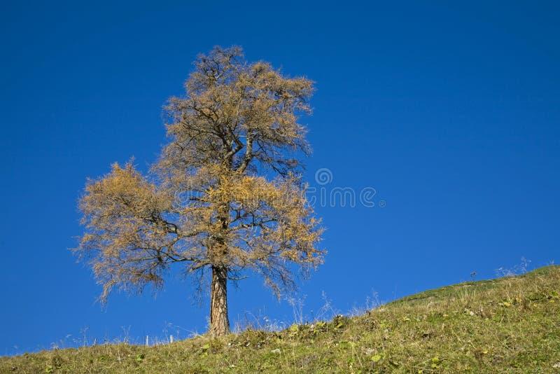 Download Jesień koloryt zdjęcie stock. Obraz złożonej z yellow - 13331758