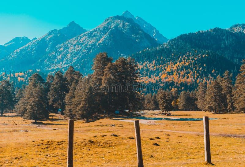 Jesie? krajobraz, drzewa na tle g?ry, g?ry, natura zdjęcia stock
