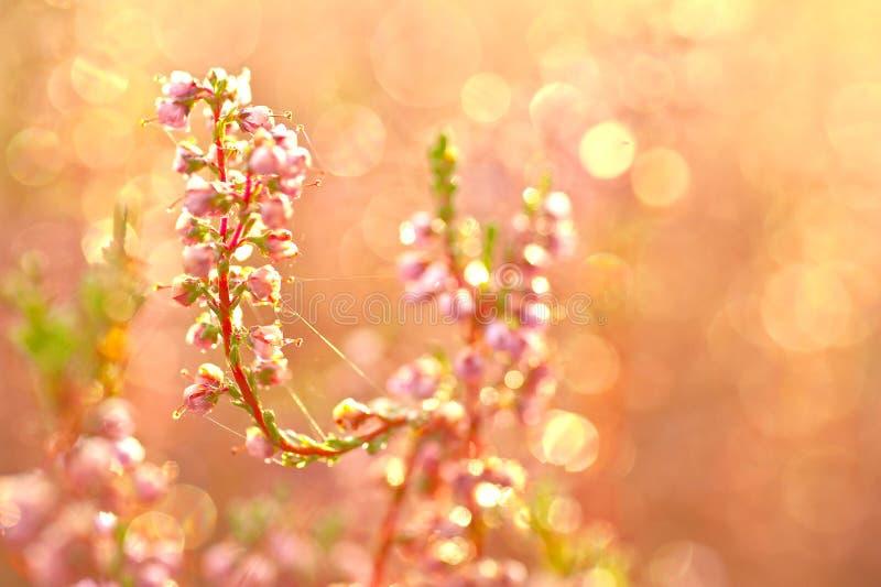 Download Jesień Kwiaty Obrazy Stock - Obraz: 26910084