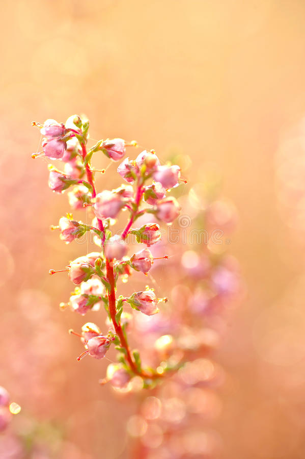 Download Jesień kwiaty obraz stock. Obraz złożonej z natura, niezrównoważenie - 26910101