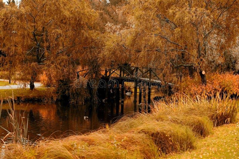 Download Jesień park obraz stock. Obraz złożonej z gałąź, piękny - 13333843