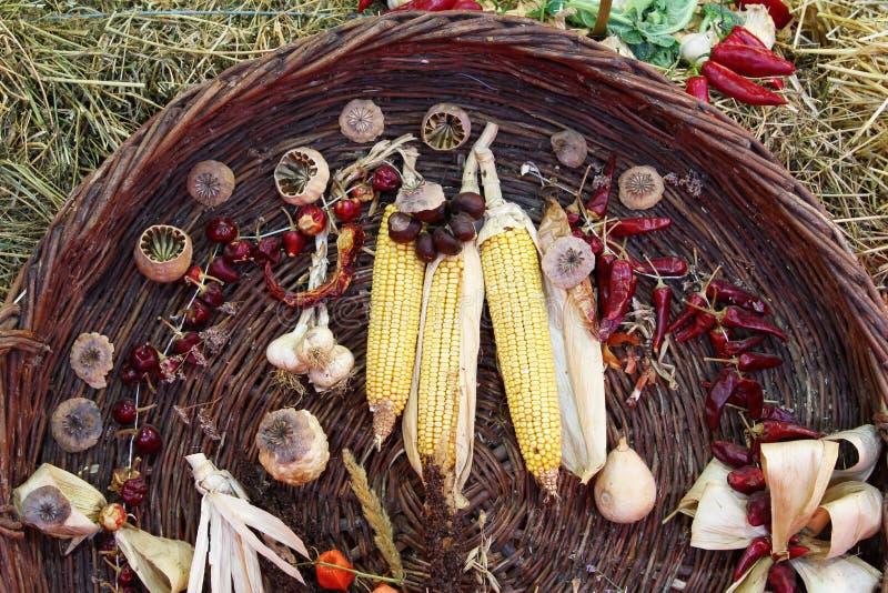 Download Jesień sezonu kraju scena zdjęcie stock. Obraz złożonej z wiejski - 26942084
