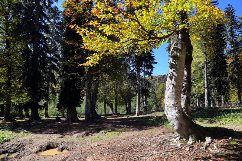 jesie? zakrywaj?cy spada? lasowy ziemi krajobraz opuszcza? kolor ? fotografia stock