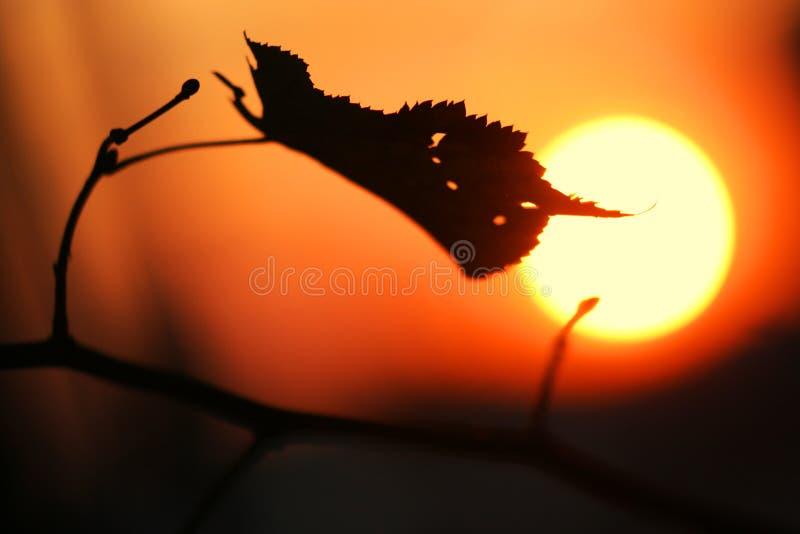 jesienią arkusz słońca zachód słońca zdjęcie royalty free