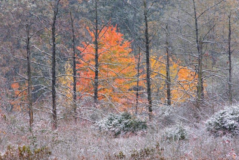 jesienią bagna śnieg fotografia stock