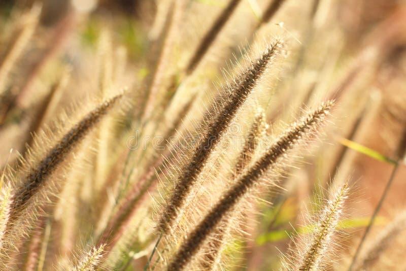 jesienią blisko trawy charakter tła, fotografia royalty free