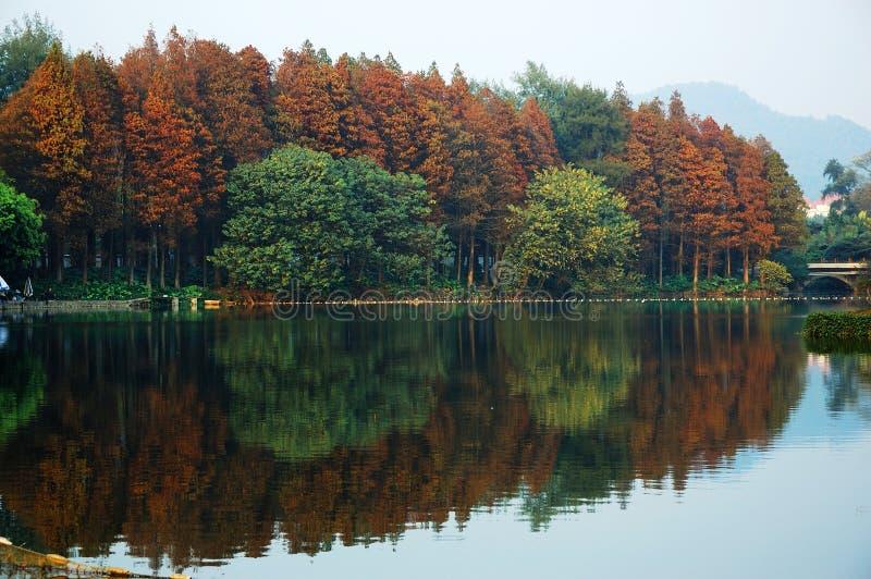 jesienią czerwonym drzewa zdjęcie stock