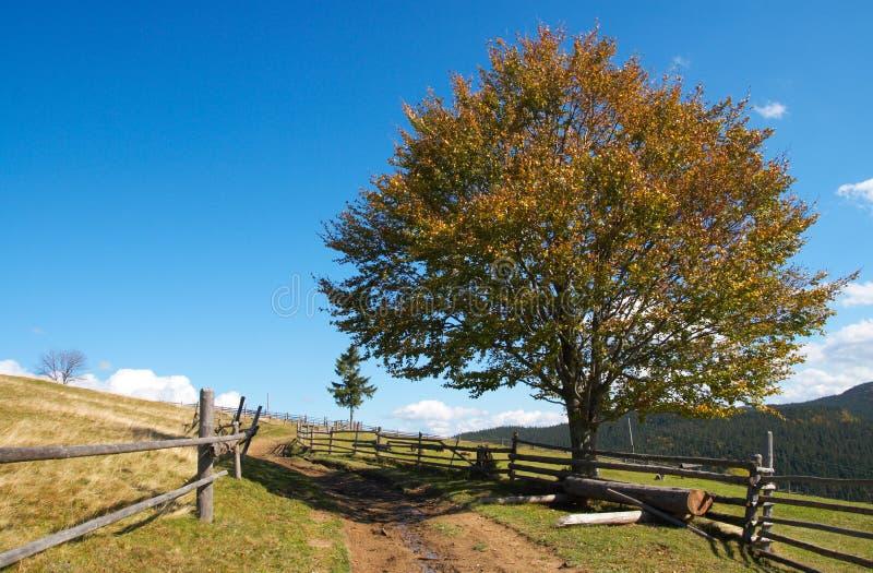 jesienią drogowy bukowy drzewo zdjęcie royalty free