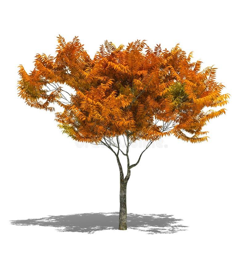 jesienią drzewo