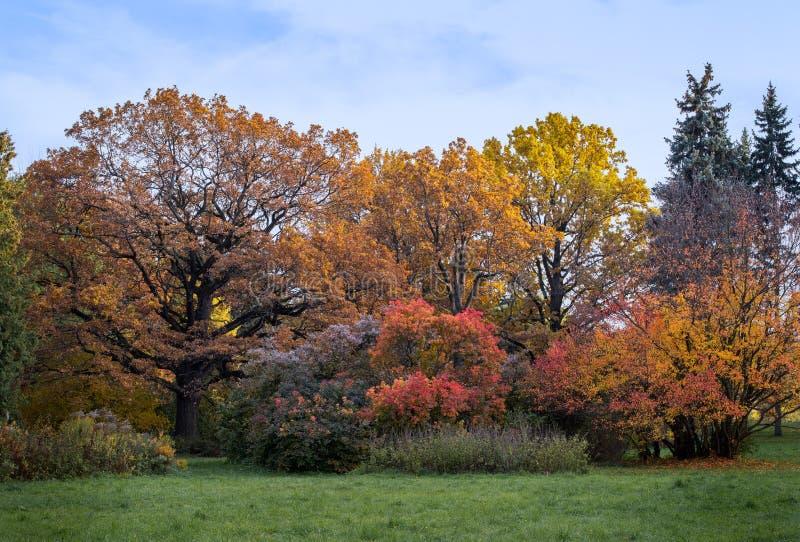 Jesienią główny ogród botaniczny w Moskwie obraz stock