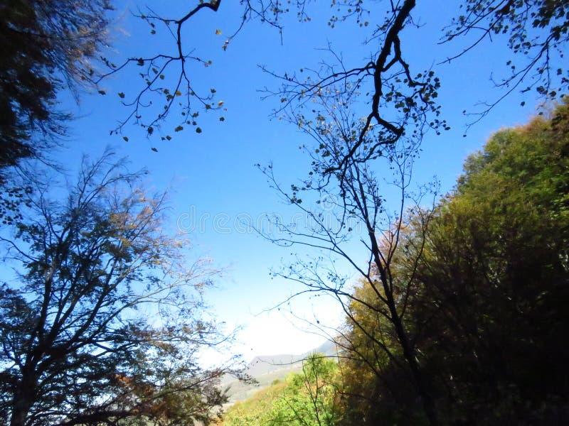 Jesienią jesień w lesie światło słoneczne przechodzące przez drzewa i błękitne niebo Jesień, sezon jesienny, światło, słońce, las zdjęcie stock