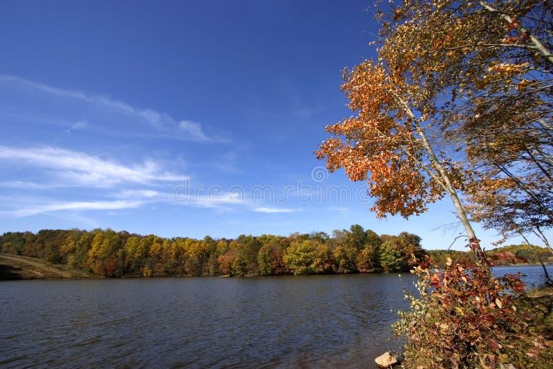 jesienią jeziora drzewo zdjęcie stock