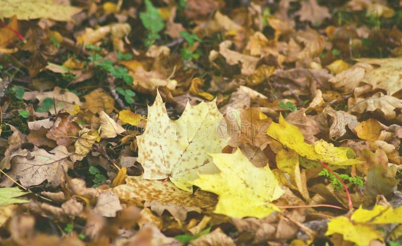 jesienią kolorowe tło Spadków dni ulistnienie zdjęcia stock
