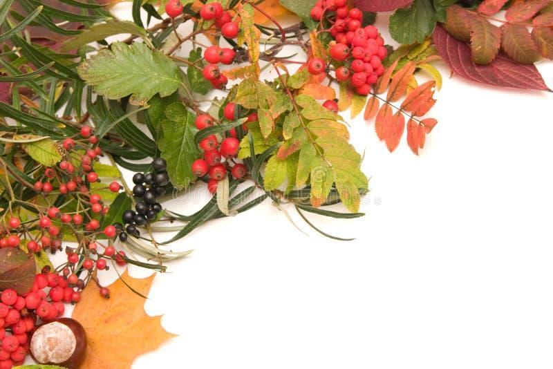 jesienią rama zdjęcie stock