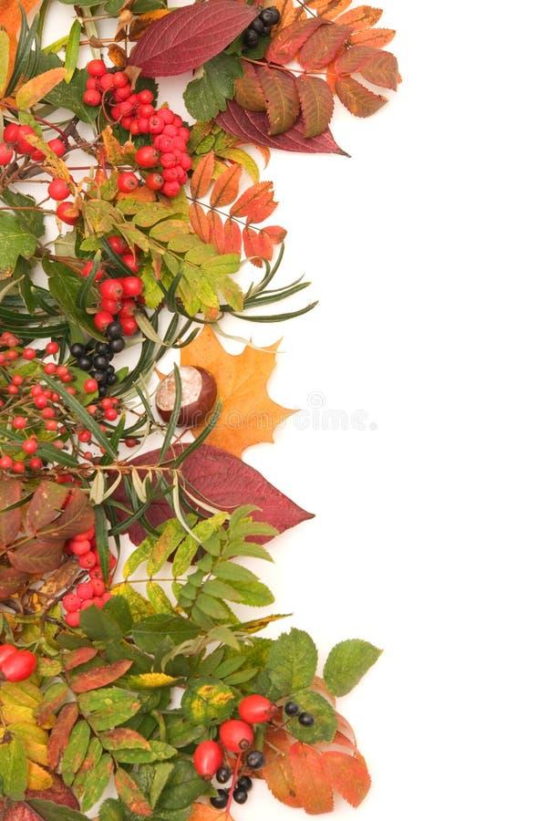 jesienią rama obrazy royalty free