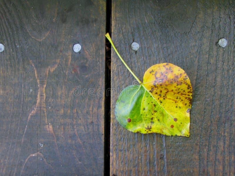 jesienią serce fotografia stock