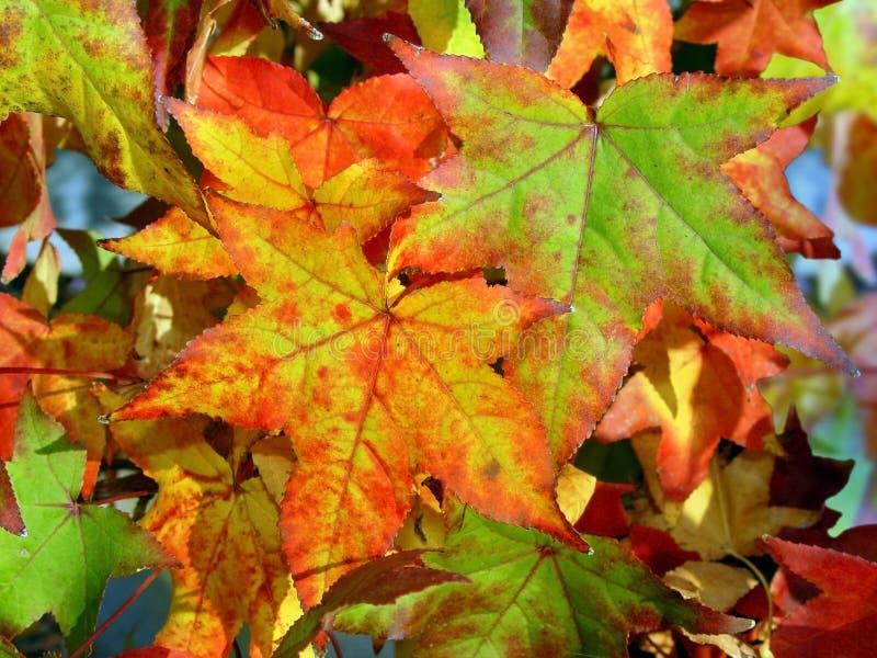 jesienią tło obraz stock