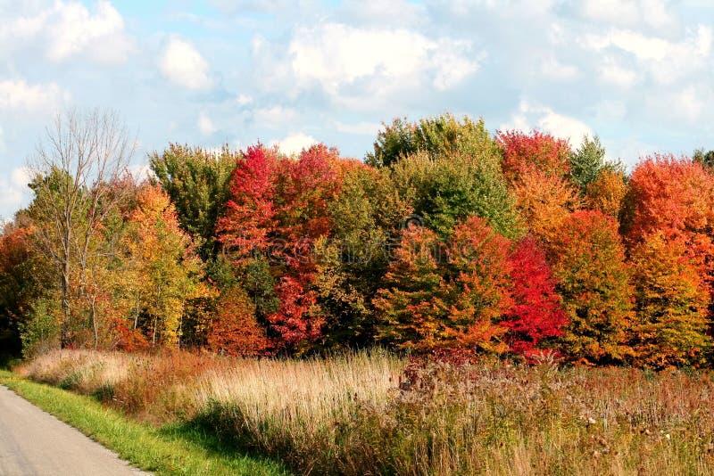 jesienią trawy drzewa fotografia stock