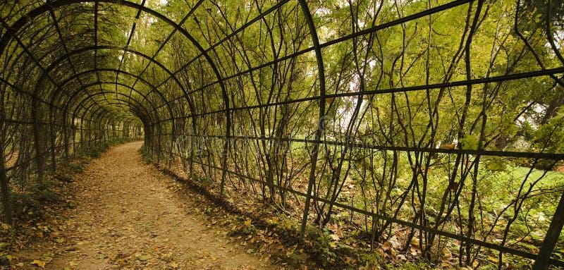 jesienią winorośli avenue fotografia stock