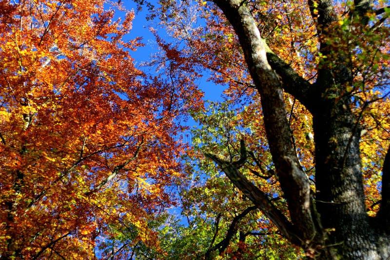 jesienią wrażenie zdjęcie royalty free