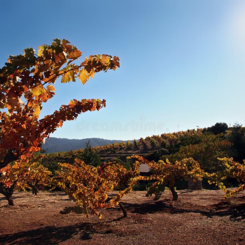 jesienią wytwórnia win zdjęcie stock