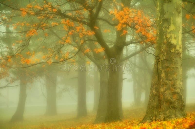 jesienią złoto fotografia royalty free