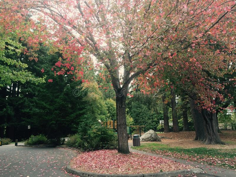 Jesieni ścieżka obrazy stock