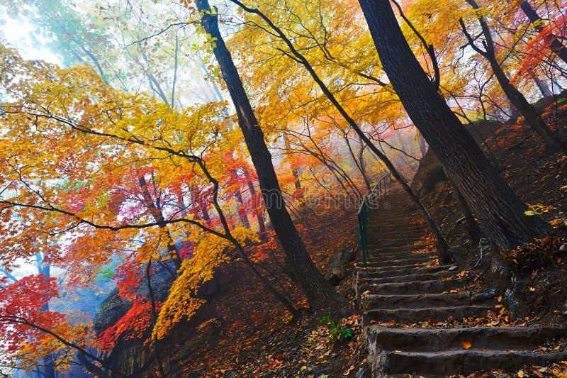Jesieni ścieżka w mgle i drzewa zdjęcia stock