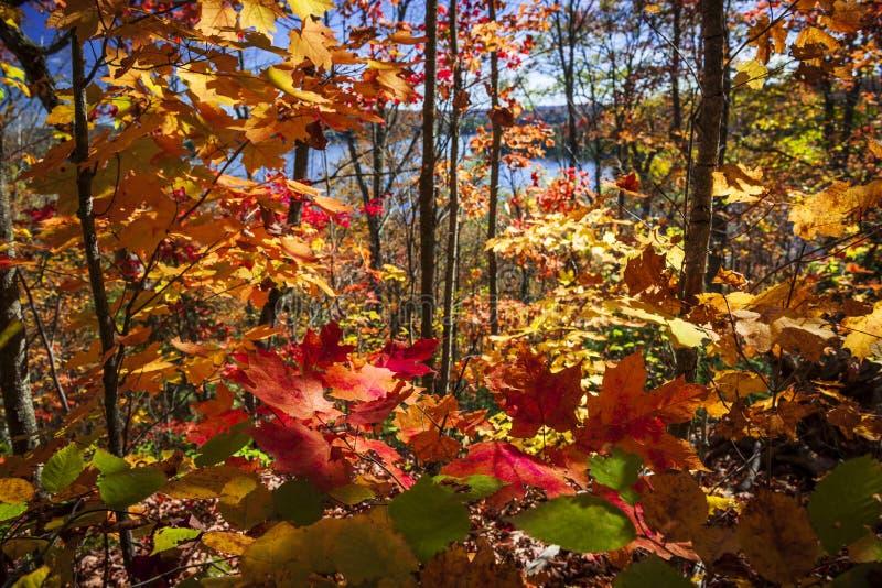 Jesieni świetność obraz royalty free