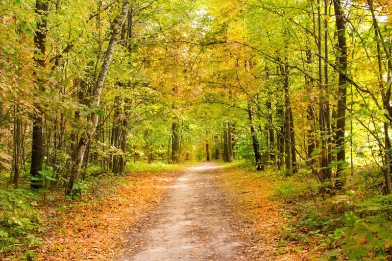 Jesieni żółtego tła ziemskiej drogi projekta spaceru romantyki lasowy nieociosany wiejski ulistnienie w świetle słonecznym obraz stock