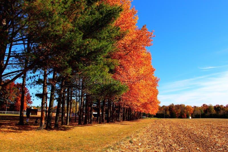 Jesieni żniwa czas: Bóg ` s farby muśnięcie zdjęcia stock