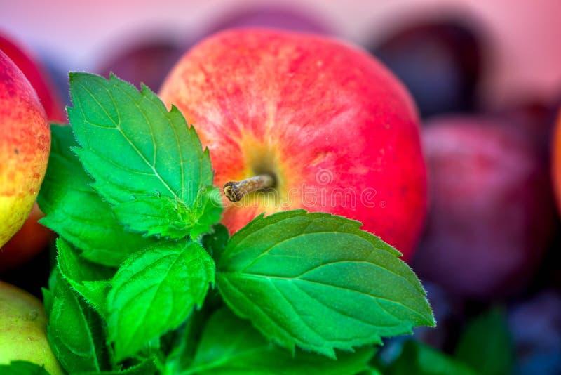 Jesieni żniwa Makro- strzał świeżo ukradziony czerwony dojrzały jabłko obok jaskrawego - zielona miętówka opuszcza i zmrok różowe obrazy royalty free