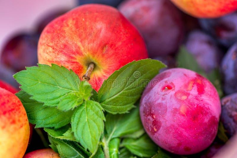 Jesieni żniwa Makro- strzał świeżo ukradziony czerwony dojrzały jabłko obok jaskrawego - zielona miętówka opuszcza i zmrok różowe obrazy stock