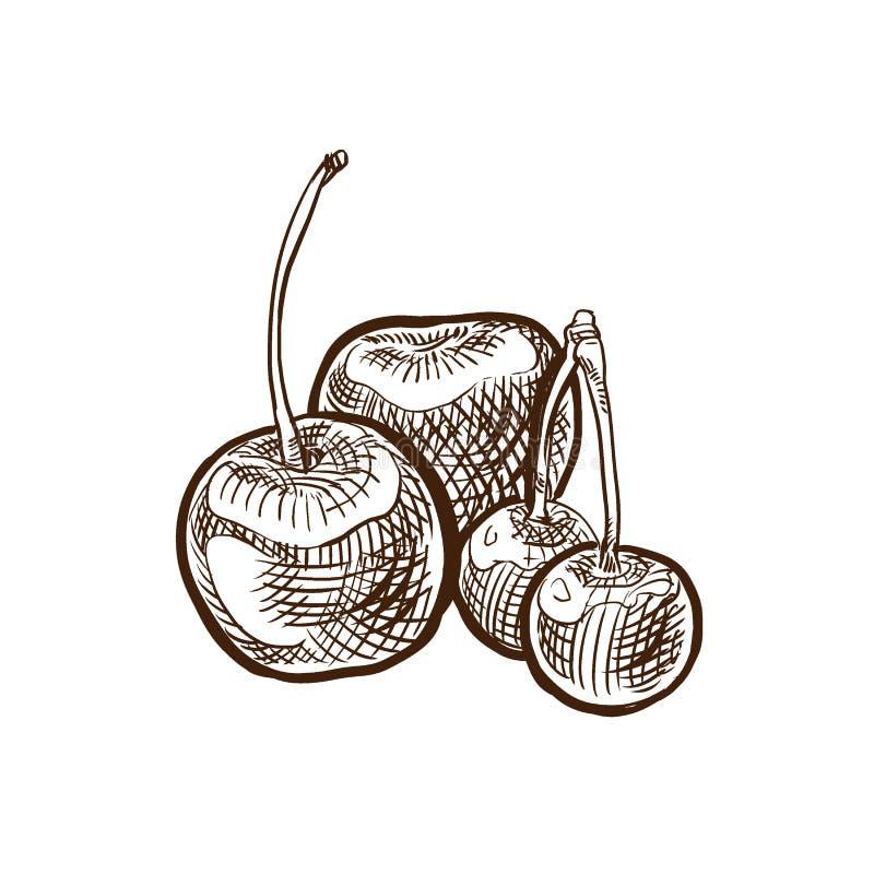 Jesieni żniwa owoc i warzywa Cukierki, dojrzała wiśnia na gałąź royalty ilustracja