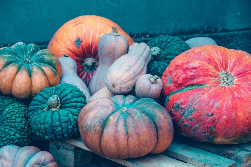 Jesieni żniwa tło z banią i kabaczkiem zdjęcia royalty free