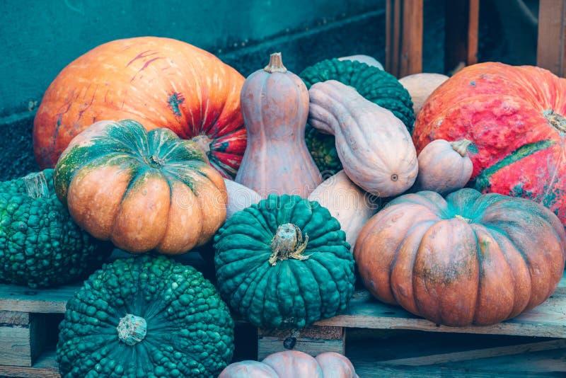 Jesieni żniwa tło z banią i kabaczkiem zdjęcie stock