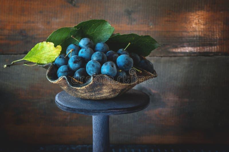 Jesieni żniwo błękitne sloe jagody na drewnianym stojaku kosmos kopii Wieśniaka styl zdjęcia royalty free