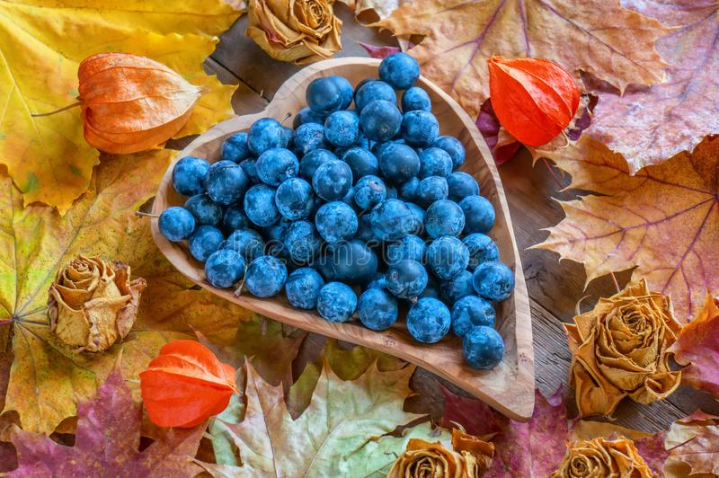 Jesieni żniwo błękitni ciernie na drewnianym talerzu w formie serca jesienią zbliżenie kolor tła ivy pomarańczową czerwień liści obraz stock