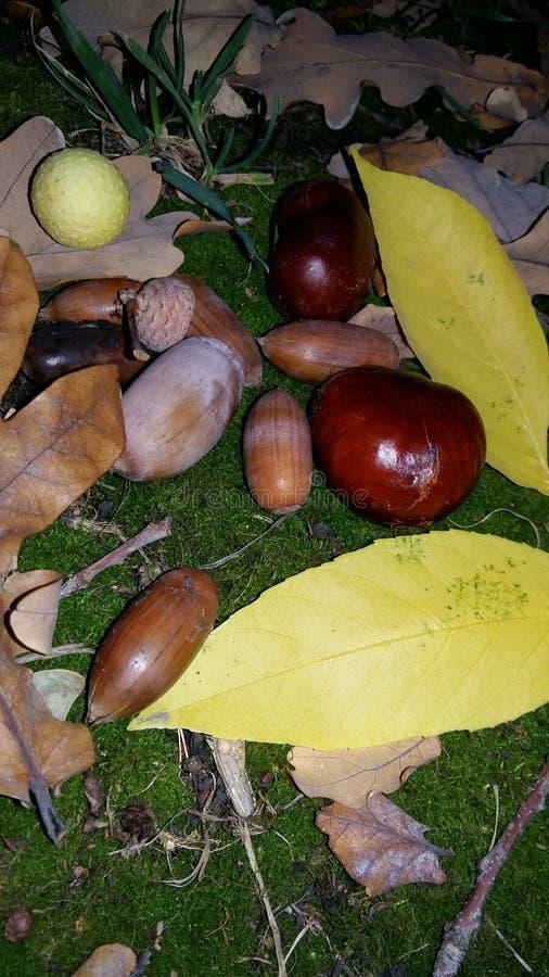 Jesieni życie z kasztanami i acorns zdjęcia stock