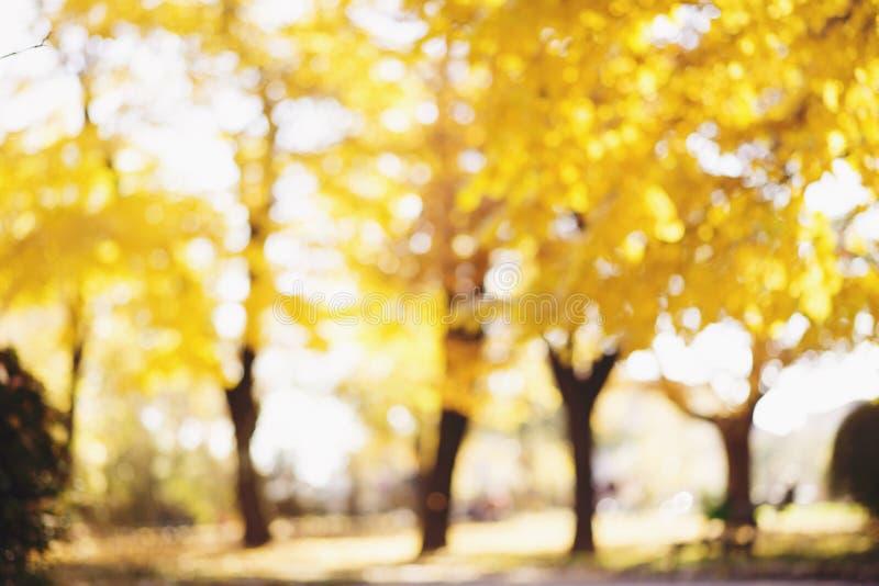 Jesieni abstrakt zamazujący tło z magiczni światła zdjęcie stock
