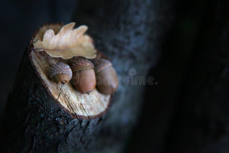 Jesieni acorn liścia lasowy dzień obraz royalty free
